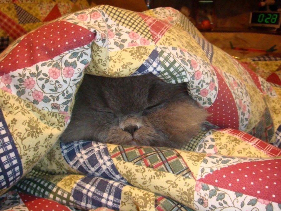 доме, при какой температуре котам не холодно поиск, актуальные