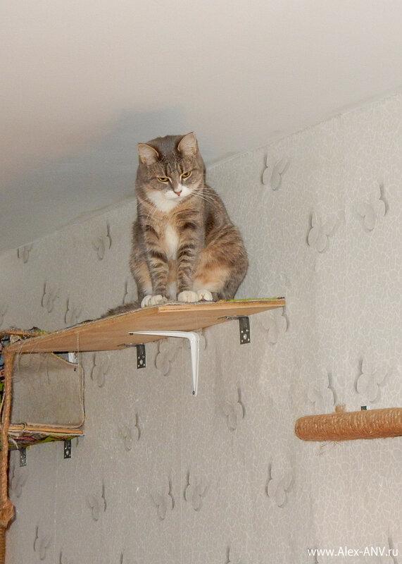 Кошки обожают сидеть наверху и внимательно наблюдать за копошением людишек где-то там внизу.