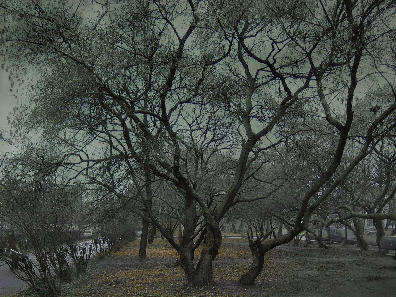 Поздняя осень. Автор фото: Юрий Семенов