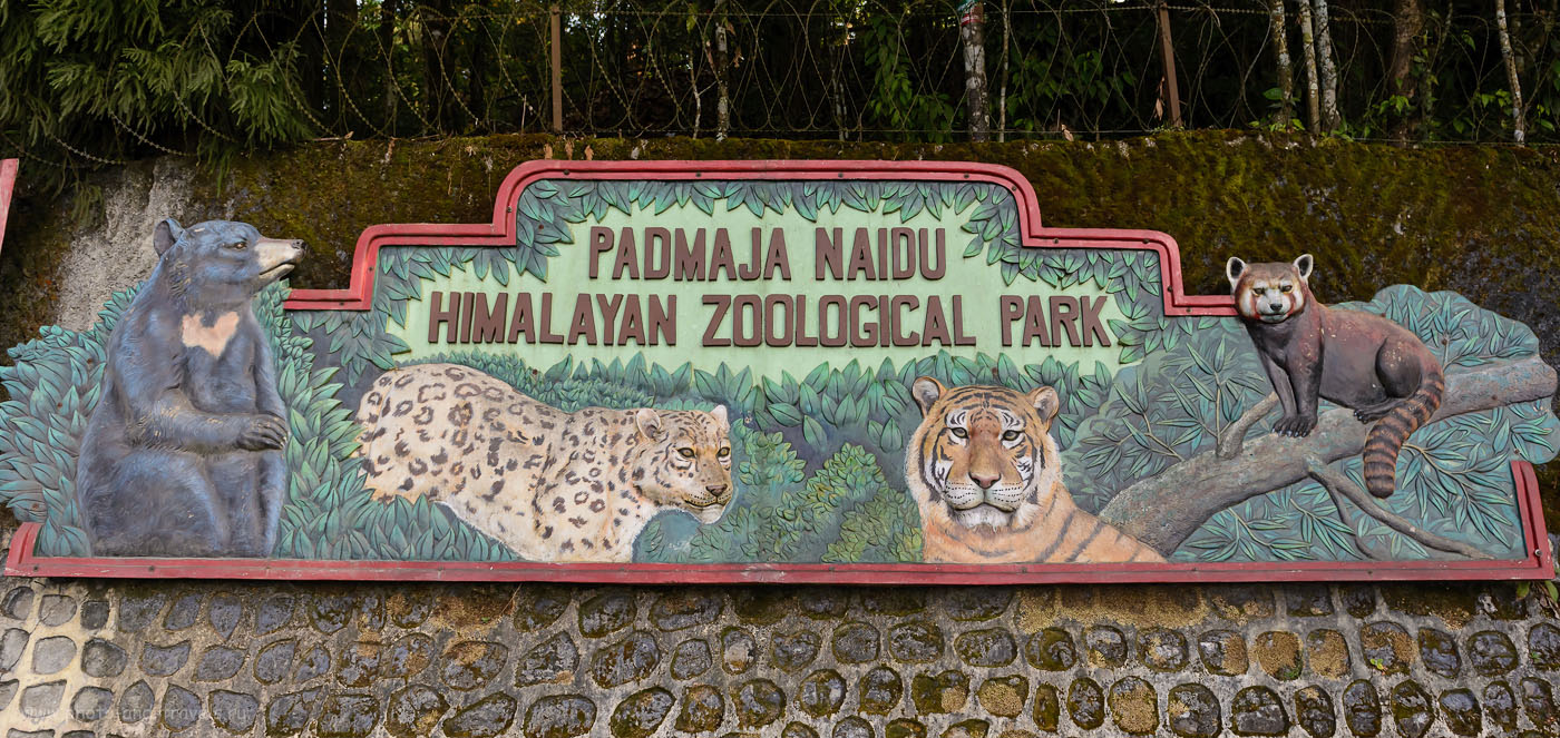 Фото 8. В зоопарке Дарджилинга можно увидеть снежного барса, красную панду и других удивительных животных. 1/800, -1, 5.0, 24.