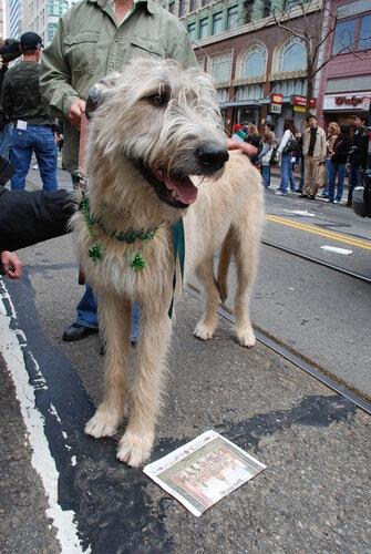Собака с зелеными ирландскими бусами