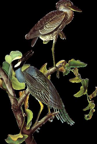 Птицы на ветках