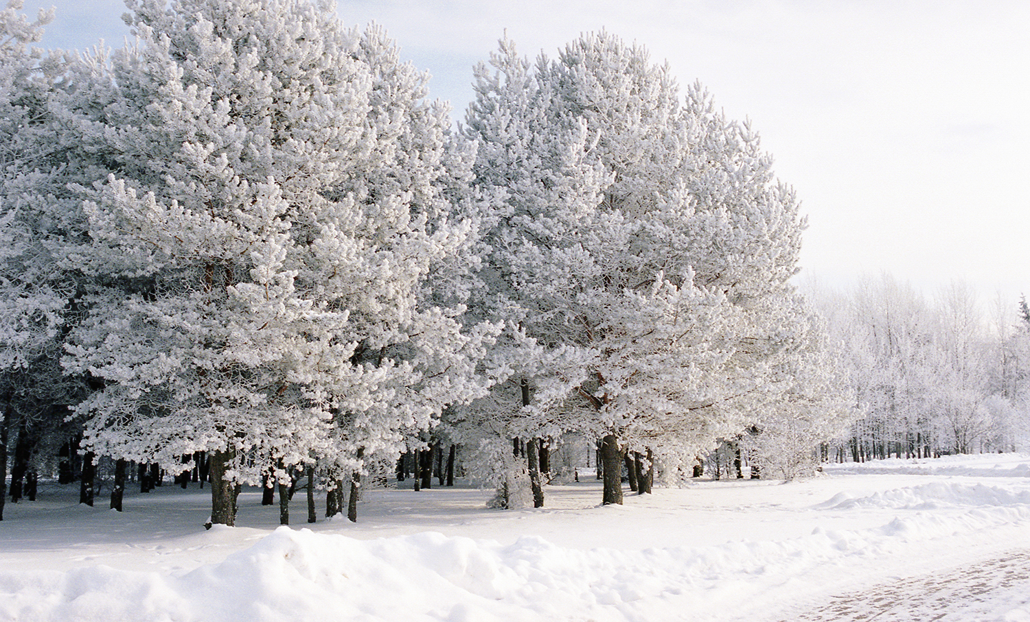 winter beauty53.jpg
