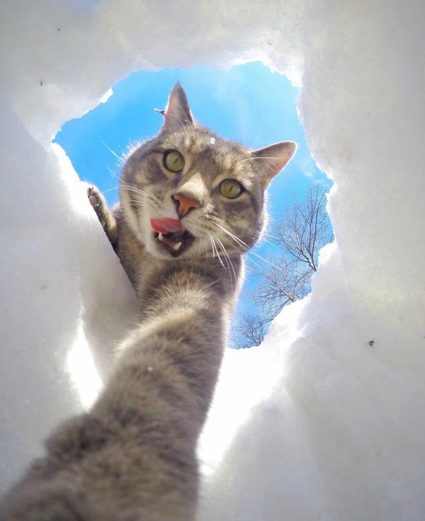 менни кот делает селфи