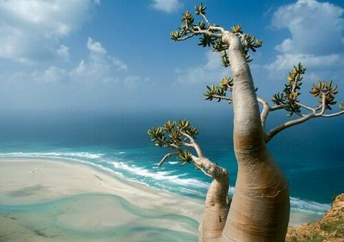 Остров Сокотра, или Земля Блаженства