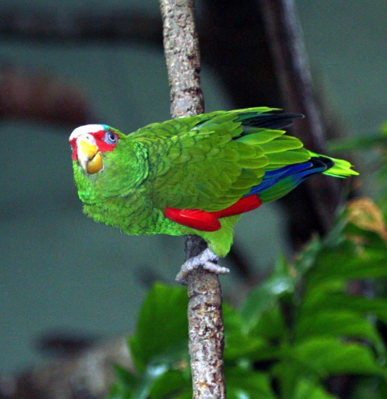 брачные ритуалы птиц