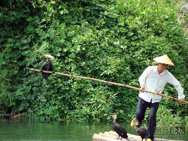 Рыбалка птичками
