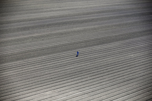 Lucy Nicholson, UK. Professional; Environment. A worker walks through dry farm fields in Los Banos,