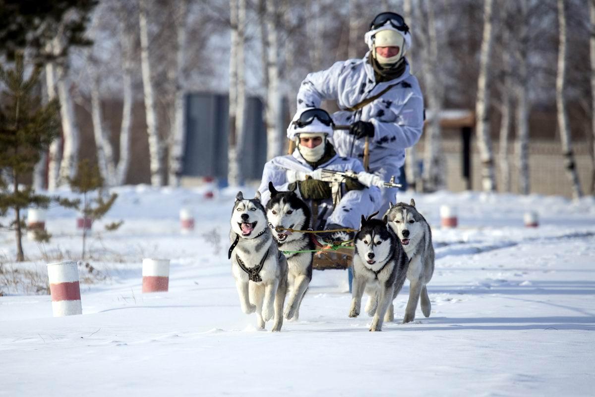 Олени хорошо, а собаки лучше: Универсальный вездеход российских арктических стрелков