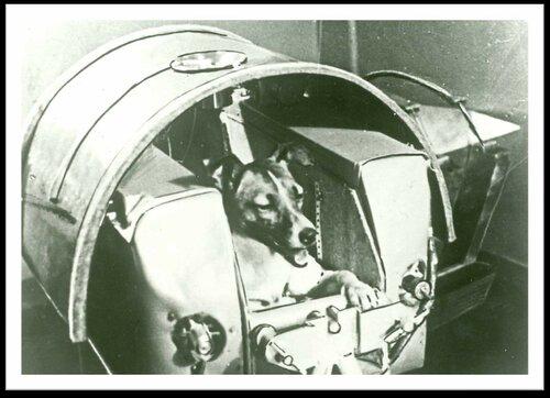 Из презентации Ильязовой2 - космонавт Лайка.jpg