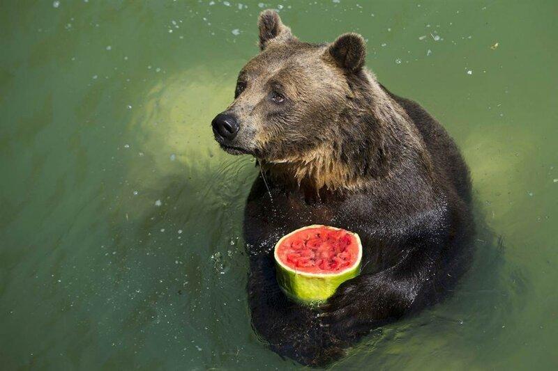 ����� ������� �� ����� ������ ������ ������������ ����� � �������� Bioparco Zoo � ����, ������. Andrew Medichini.