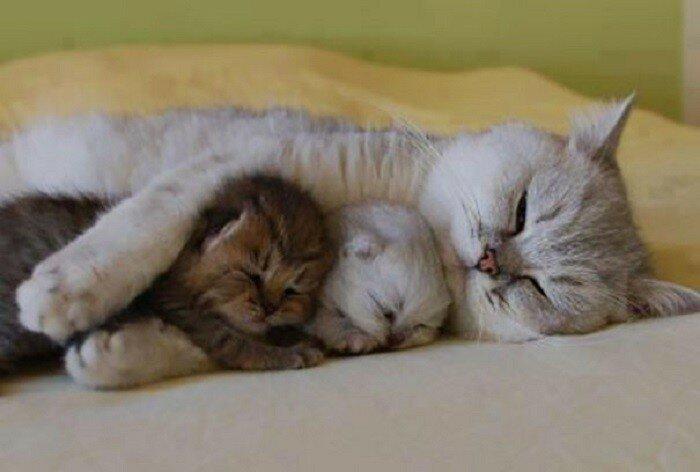 Сон с детьми
