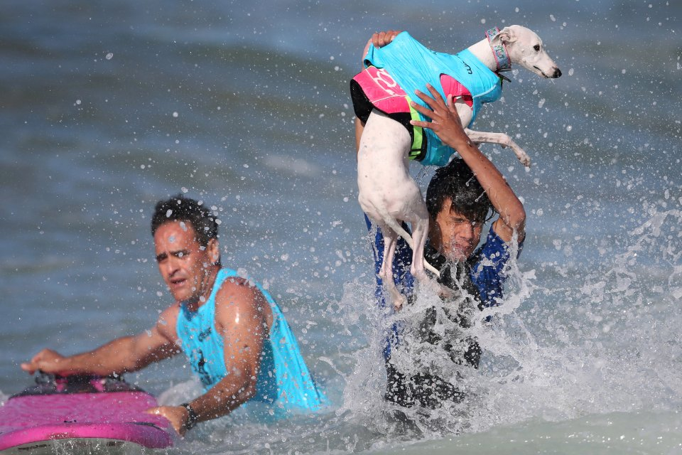 A man lifts a dog out of the surf during the Surf City Surf Dog competition in Huntington Beach