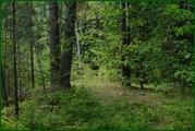 http://img-fotki.yandex.ru/get/26439/15842935.382/0_ead45_a4ef4f2b_orig.jpg