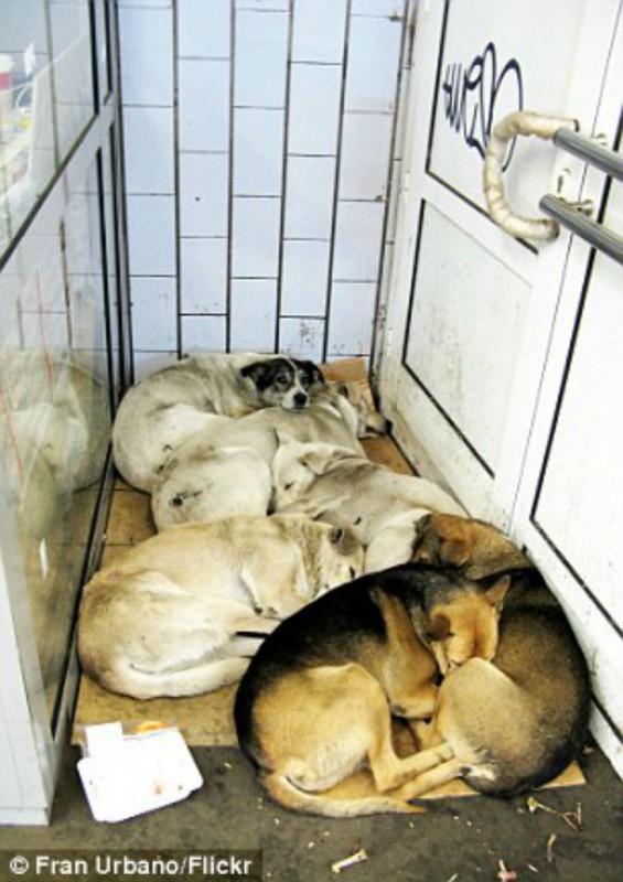 Несмотря на то что они могут пострадать от злых людей, собаки все равно возвращаются в подземку.