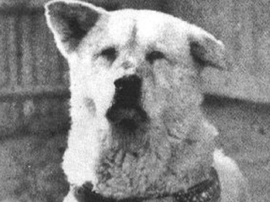 И реально живший пес Хатико в Японии. История собаки настолько тронула людей, что после ее смерти в