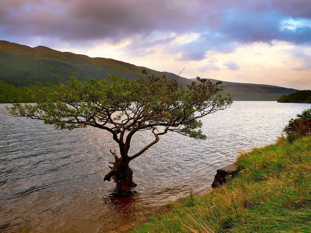 20. Некоторые деревья растут прямо в озере Лох-Ломонд, юго-запад Шотландии.