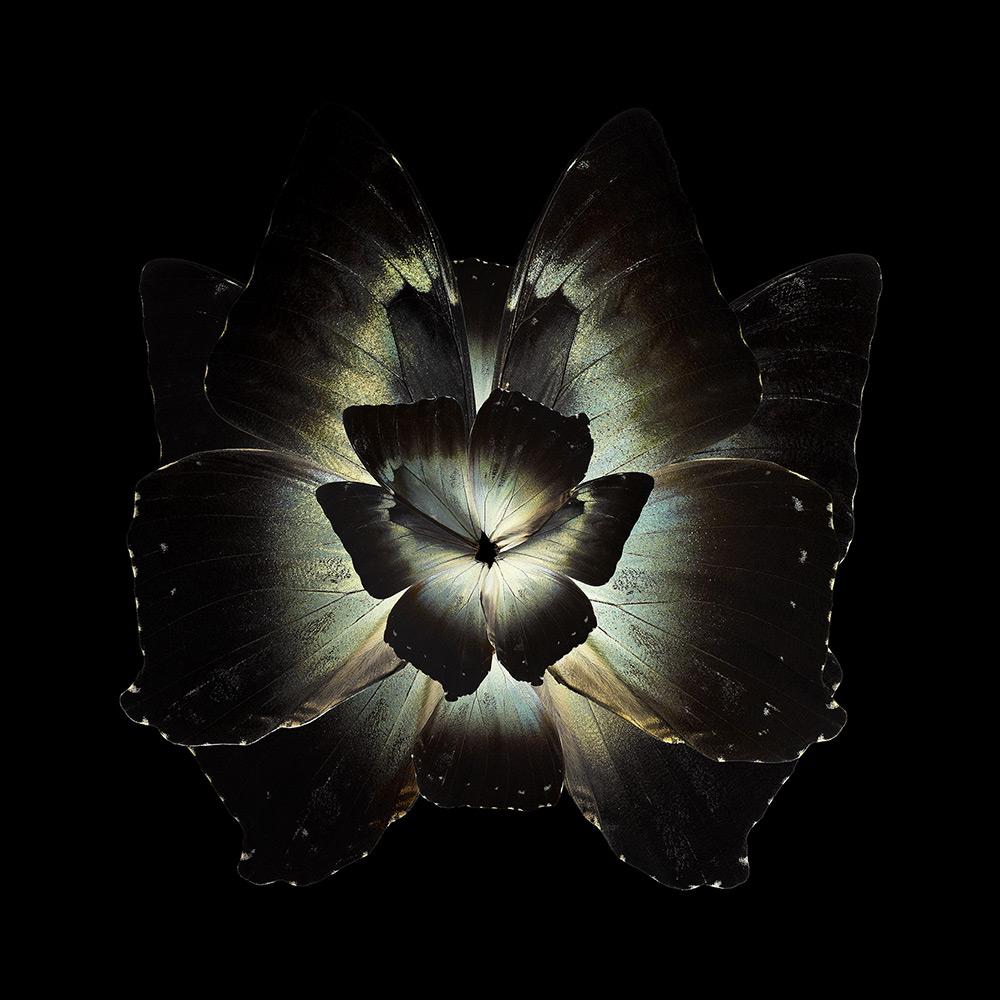 Mimesis - Tradescantia Ganymedia , 2012. Chromogenic print. Format 180 x 180cm (70.9 x 70.9 in)