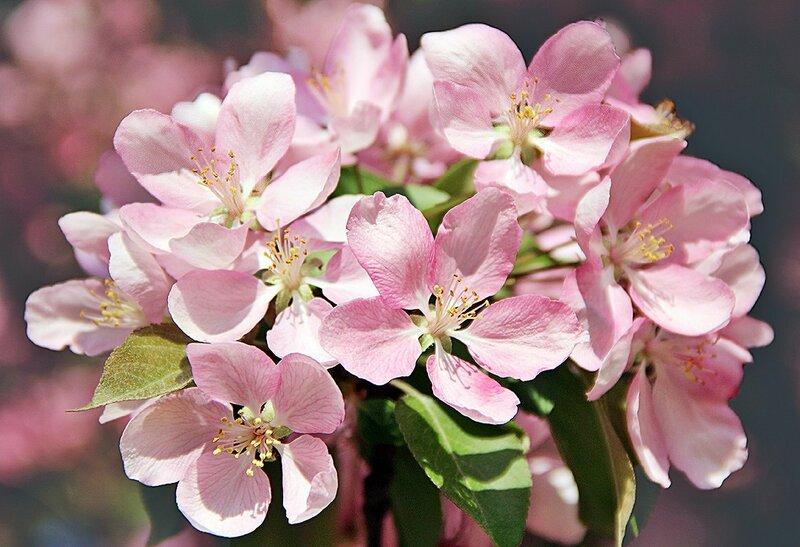 Весна красна цветами