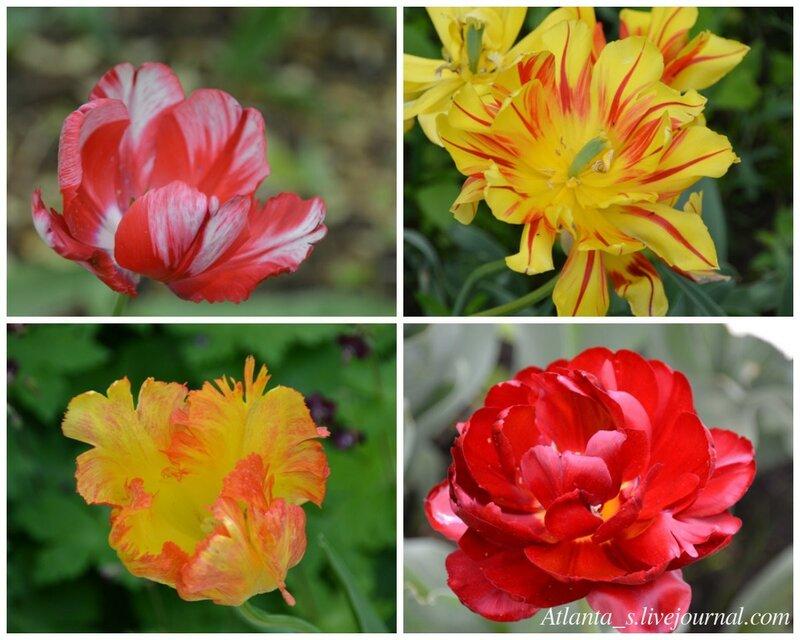 watermarked - тюльпаны 6.jpg