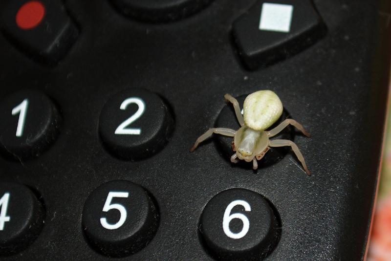 паук инвалид 1.jpg