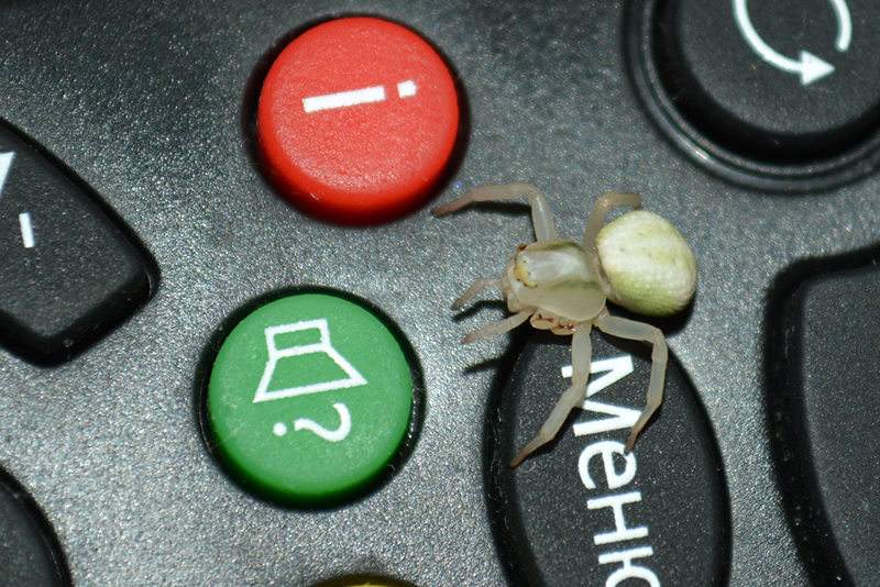 паук инвалид 6.jpg