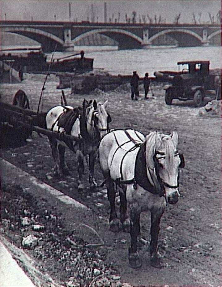 1931. Лошади на платформе Рапи
