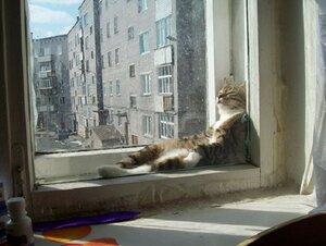 Милейшие коты, которых сон застал в неожиданных местах