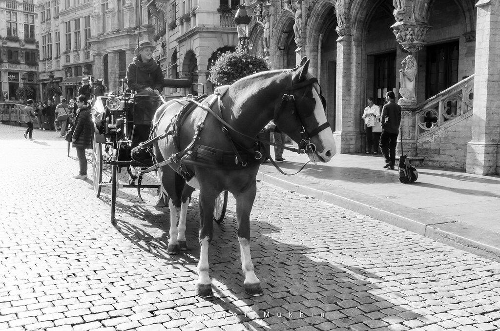 2013-09-17-Brussel-8333.jpg