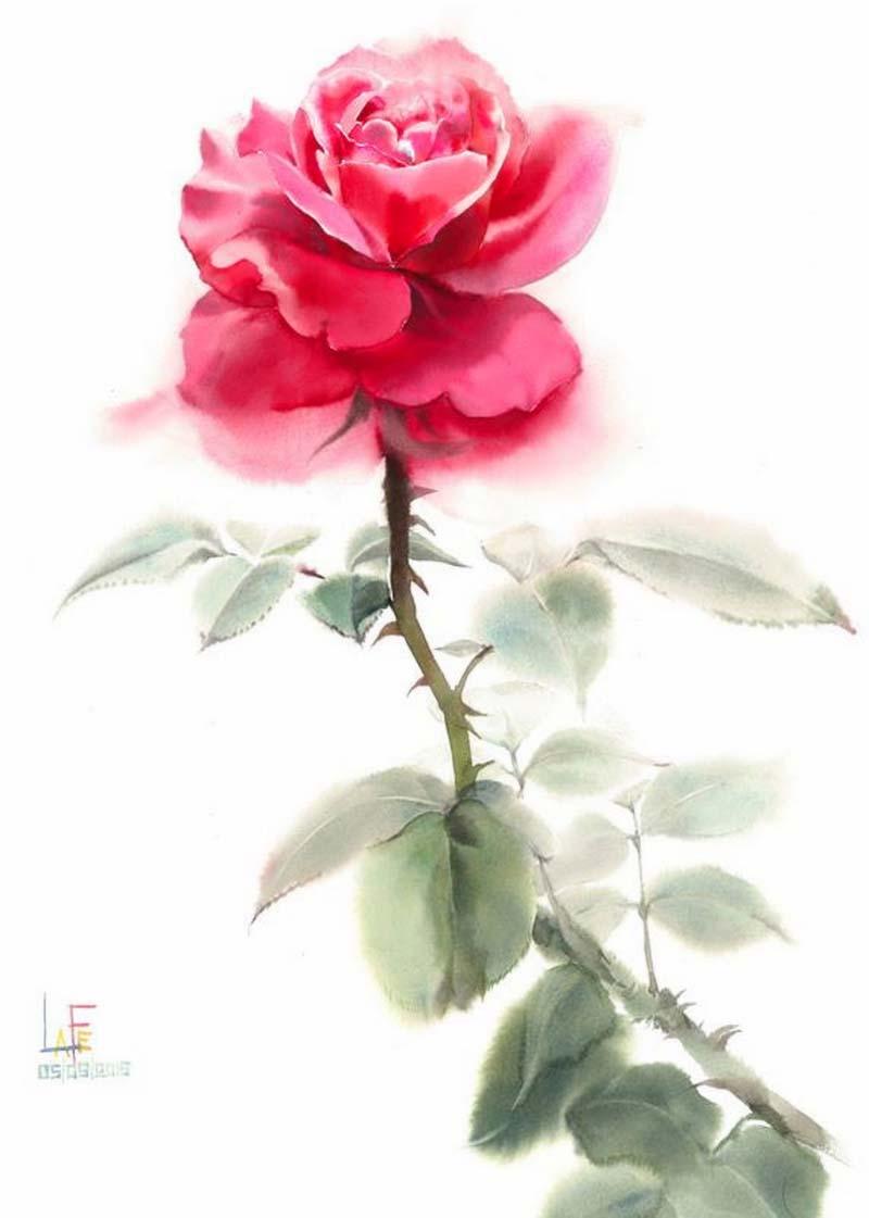 розы-41.jpg