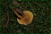 http://img-fotki.yandex.ru/get/26440/15842935.382/0_ead6b_b8b1e0bc_orig.jpg