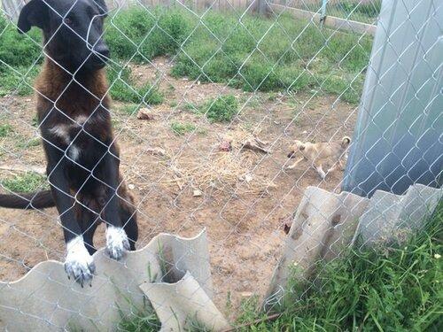 В Твери неизвестные убивают собак и увозят их тела в пункт отлова в Рамешки