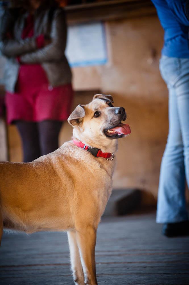 Дуся собака из приюта догпорт