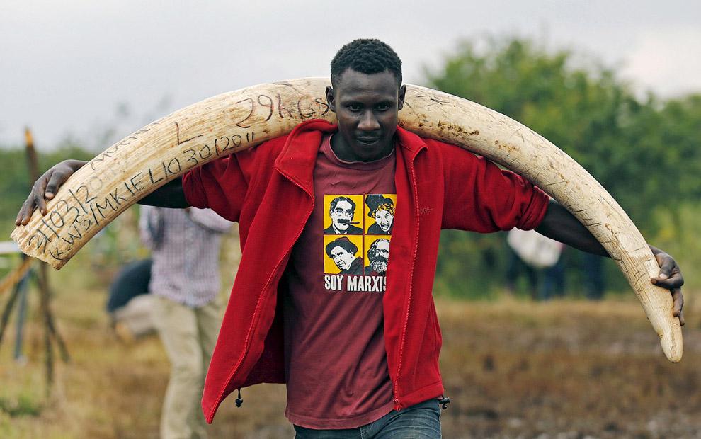 Сегодня эпицентром браконьерства стала Восточная Африка. В июне правительство Танзании сообщило, что