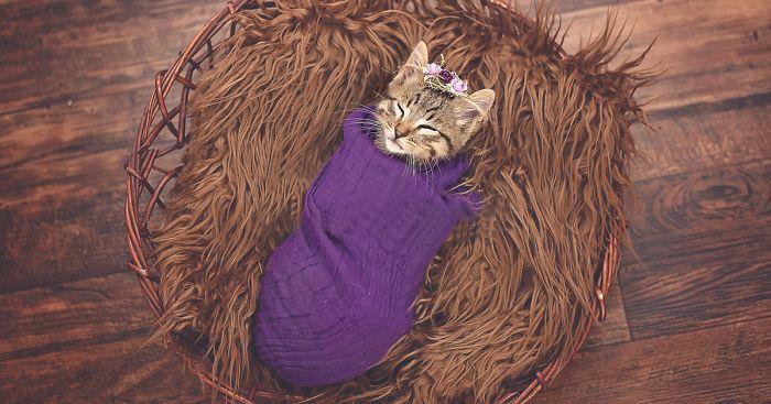 Фотосессия новорожденного котенка