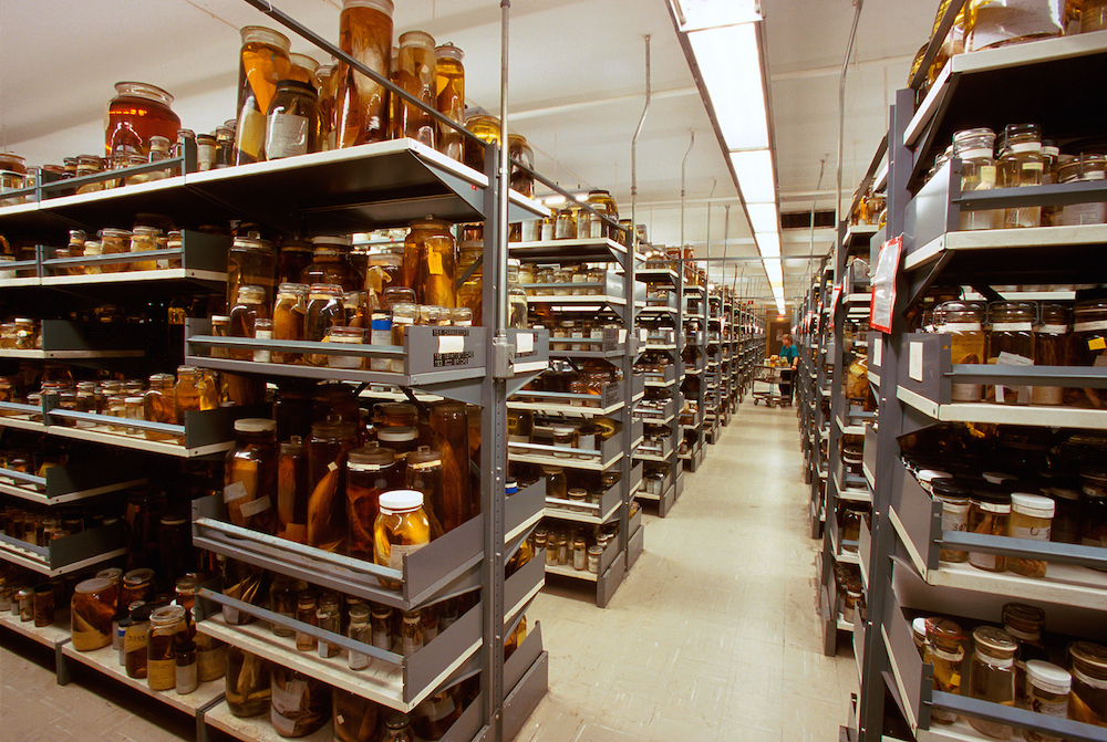 The Department of Vertebrate Zoology's wet collections of fish specimens preserved in alcohol, locat