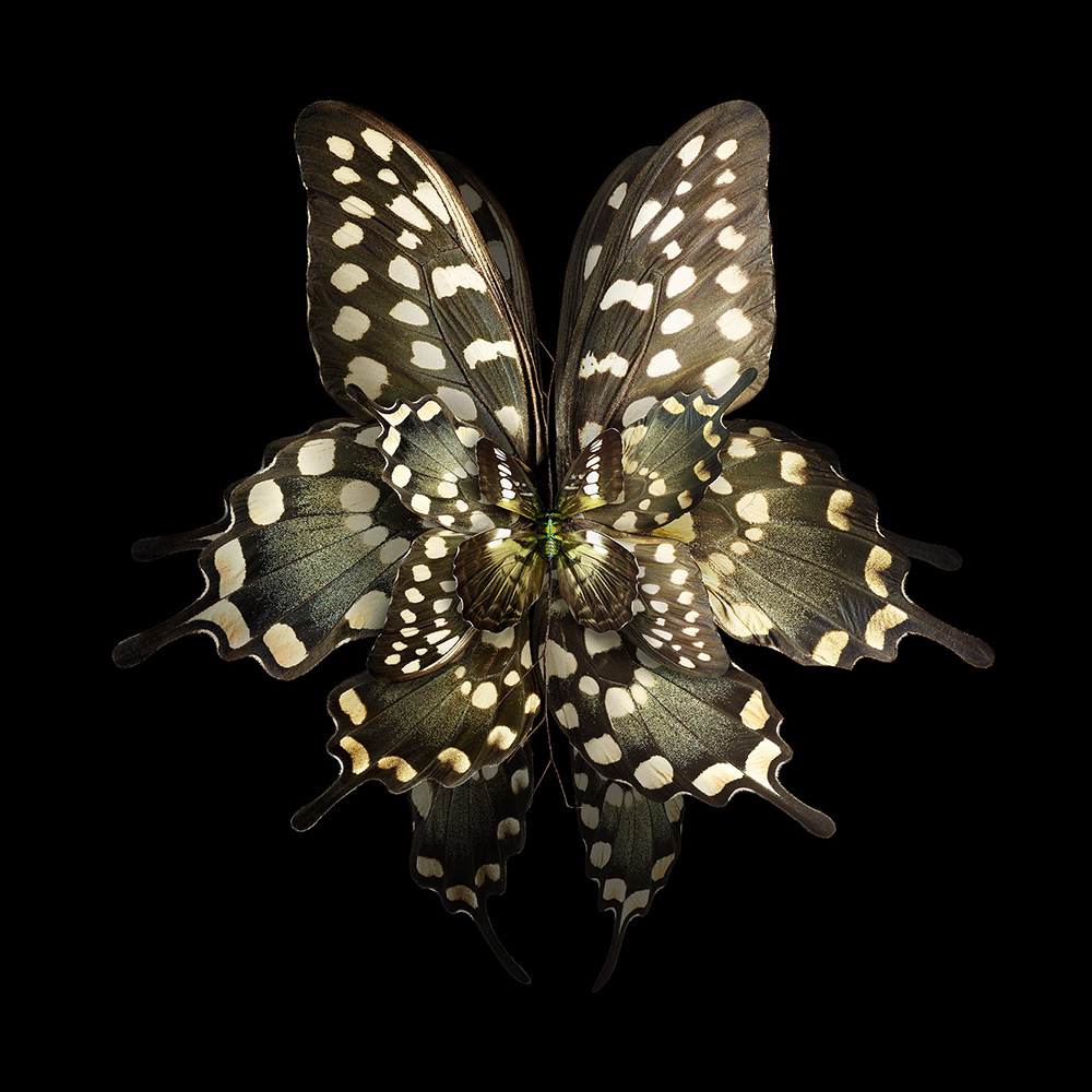 Blooms of Insect Wings Created by Photographer Seb Janiak