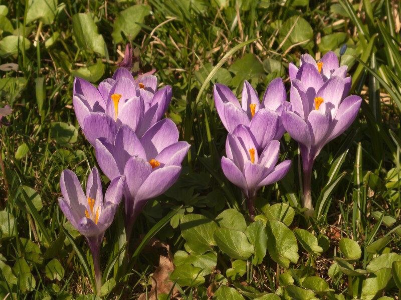 Факелы весны