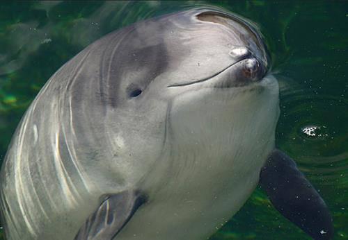 Еще такие жертвы российских оккупантов: За строительство Керченского моста гибнут краснокнижные дельфины