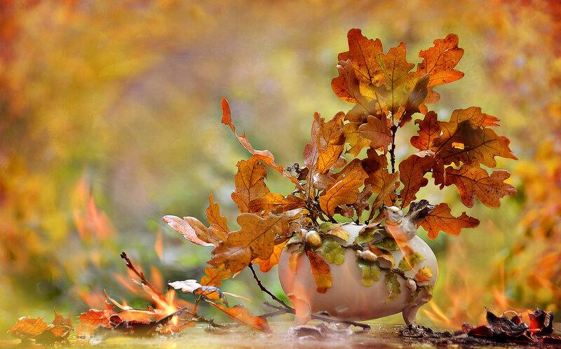 Осень, в небе жгут корабли....
