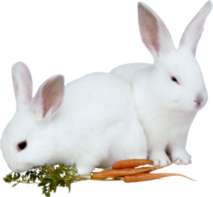 зайчата с морковкой
