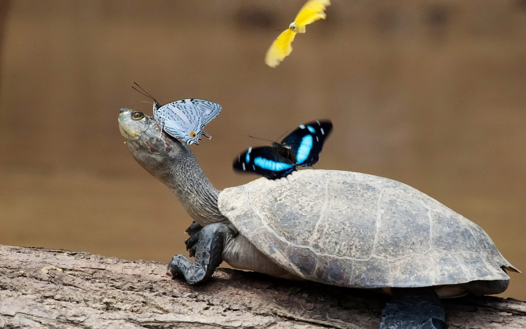 Черепаха і метелик