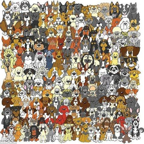 Найди кота среди сов ответ