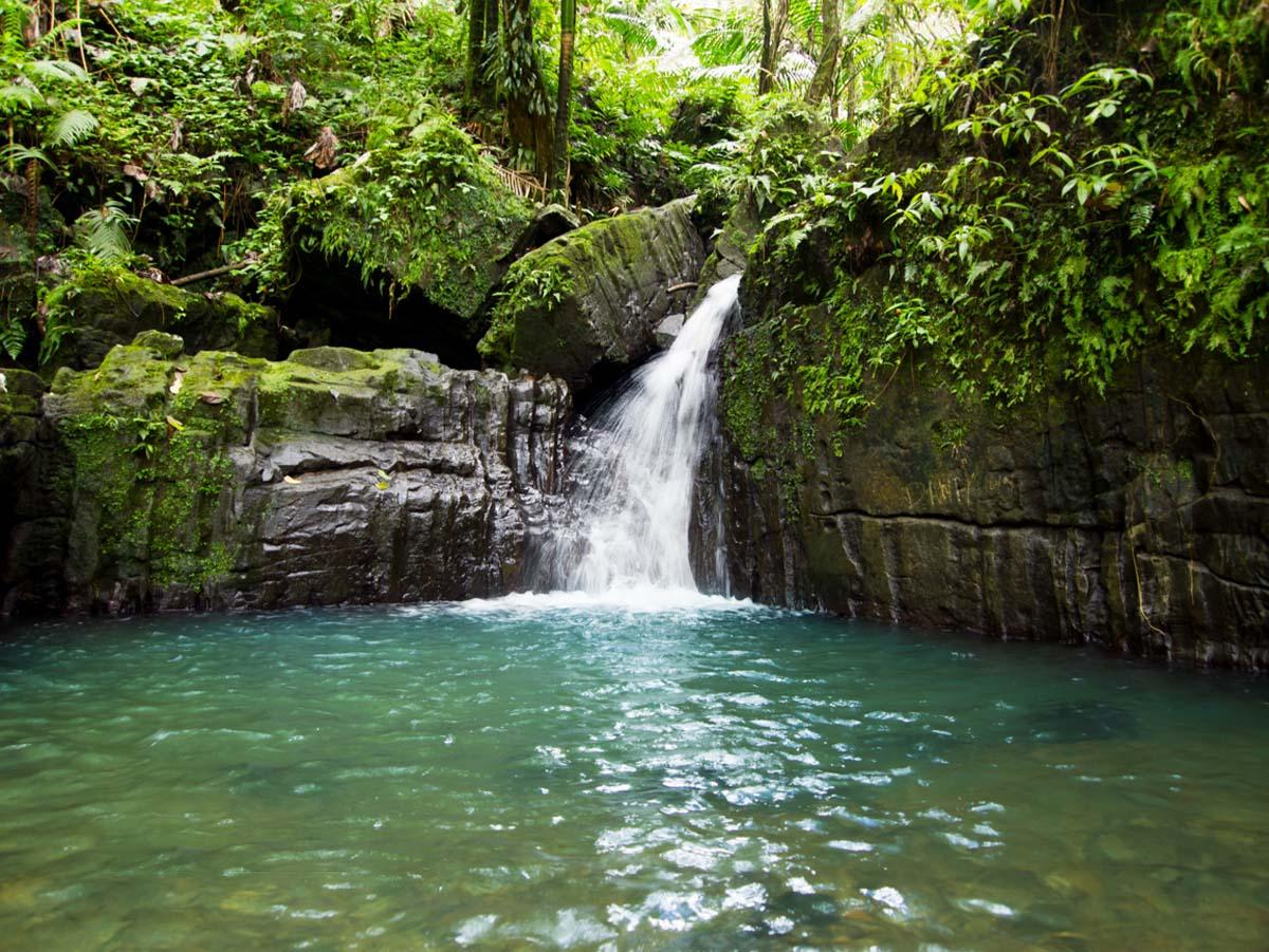 Заповедник Эль-Юнке-совершенно сказочное место с удивительным разнообразным животным и растительным