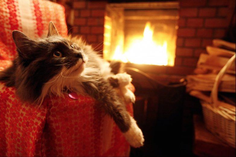 20. А холодными осенними вечерами греться у камина с кружкой ароматного чая
