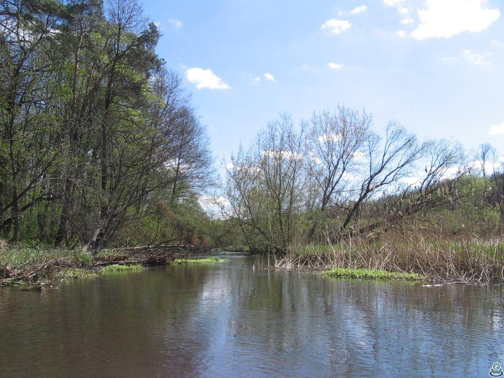 Река Боромля ниже Тростянца