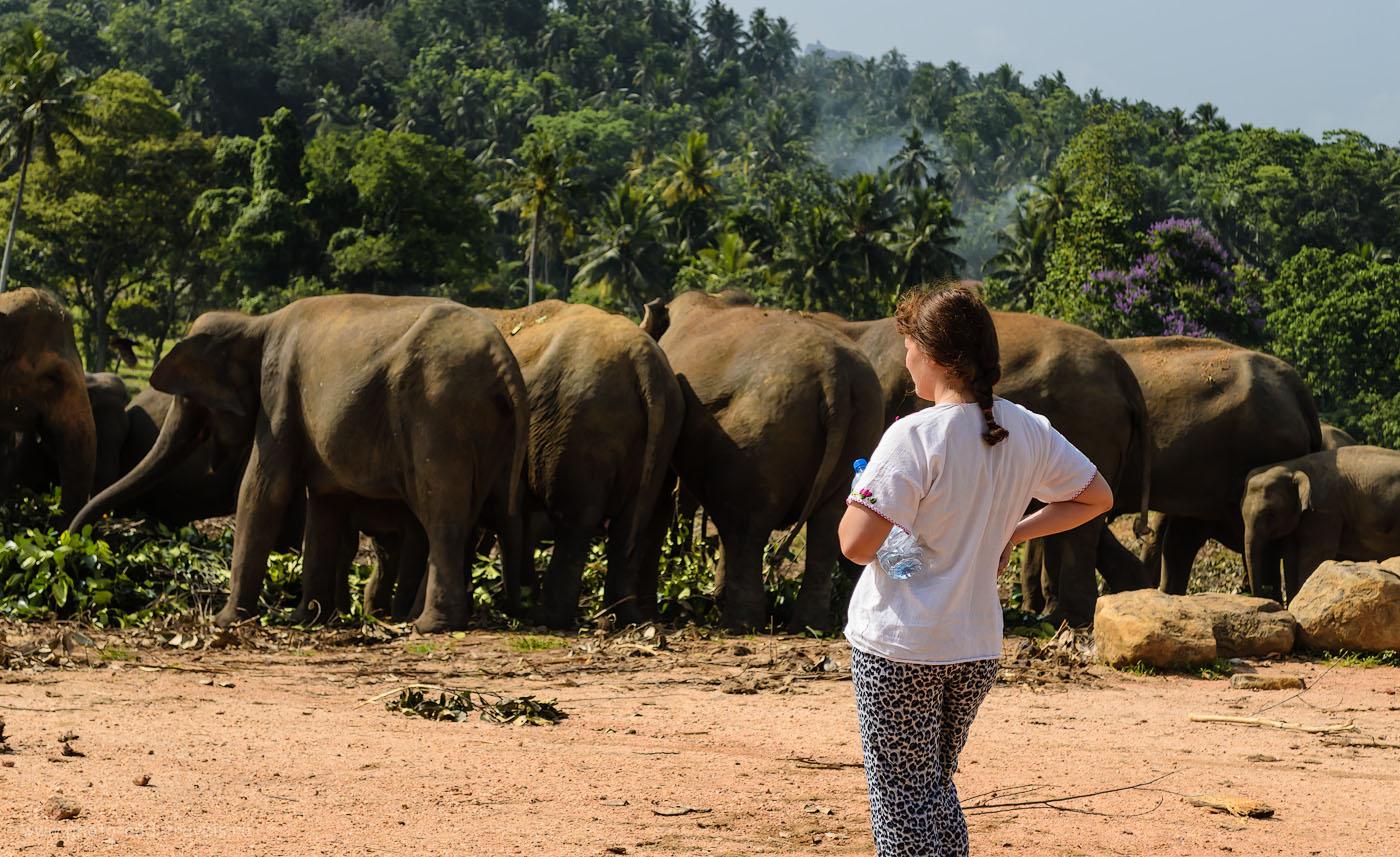 Фото 5. Лучше нет красоты, чем смотреть на слоновьи попки в приюте Pinnawala Elephant Orphanage в деревне Пиннавела на Шри-Ланке. Отзывы туристов об отдыхе в мае.