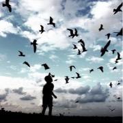 Птицы и мальчик