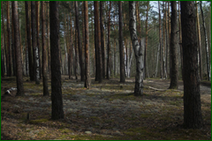 http://img-fotki.yandex.ru/get/26767/15842935.2dd/0_e30b8_831cec3c_orig.png