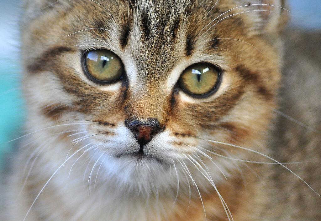 Грустный Котя